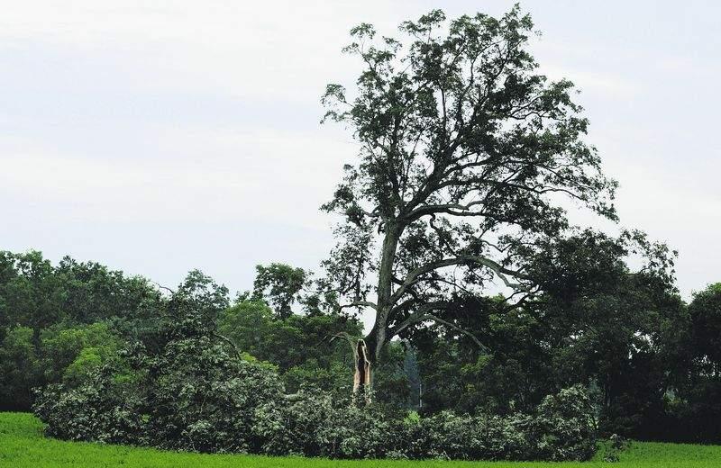 嵐で真っ二つになった映画「ショーシャンクの空に」のラストシーンに登場する大木